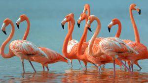 Felamingo 18 B