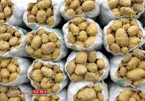 Potato 15 Kh