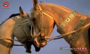 Horse Turkmens News