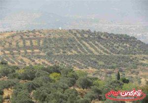 Arazi Golestan